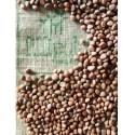 Semillas de Rabanito Rosa - 50gr